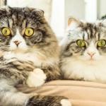 長嶺ヤス子(フラメンコダンサー)は猫好き!経歴や収入源は?