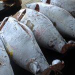 中島英樹(ビッグヨーサン)は鮮魚バイヤー!凄腕の理由とは?