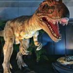富田京一(爬虫類研究家)の経歴や著書は?恐竜にも詳しいは本当?